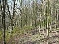 Trees on the former railway embankment, Clifton - geograph.org.uk - 758785.jpg