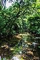 Tropical Rain Forests, North Eastern India (7344209020).jpg