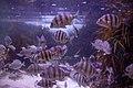 Two Oceans Aquarium 2018 16.jpg