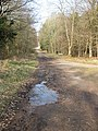Two trails meet, Forest of Dean - geograph.org.uk - 1234675.jpg