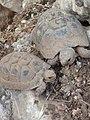Two turtles.jpg