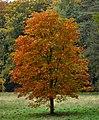 Uetersen Herbstbaum 01.jpg