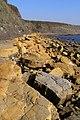 Under-cut dolomite bed in the cliff, Kimmeridge Bay - geograph.org.uk - 695347.jpg