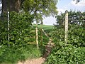 Unexpected footpath - geograph.org.uk - 792530.jpg