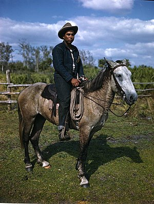 Seminole Tribe of Florida - Seminole cattleman - Brighton Reservation, Florida (1949)