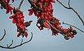 Unidentified flowers in Bangladesh (26762194878).jpg