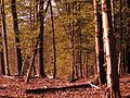 V lese - panoramio (3).jpg