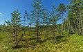 Valdai National Park asv2018-08 img03 Roschino.jpg