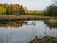 Valgejõgi (2).jpg