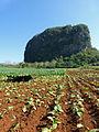 Vallée de Viñales-Mogote et champ de tabac.jpg