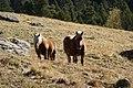 Vall de Sorteny (Ordino) - 18.jpg