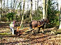 Valley Park - Logging the Old Fashion Way - geograph.org.uk - 697956.jpg