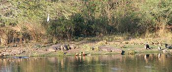 Van Vihar National Park, Bhopal (MP), India.jpg