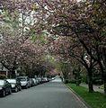 Vancouver street.jpg