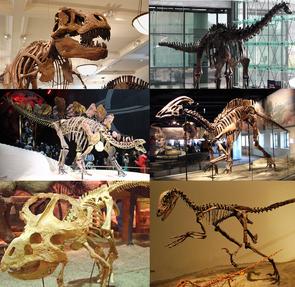 Montierte Skelette verschiedener Nicht-Vogel-Dinosaurier (Im Uhrzeigersinn, beginnend links-oben: Tyrannosaurus, Diplodocus, Parasaurolophus, Deinonychus, Protoceratops, Stegosaurus)