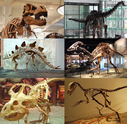 Skeleton of various extinct dinosaurs; some other dinosaur lineages still flourish in the form of birds Various dinosaurs.png