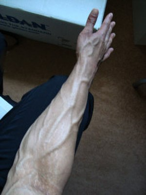 Vascularity - Vascularity in an adult forearm.