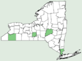Veronica filiformis NY-dist-map.png