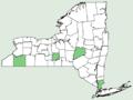 Veronica filiformis NY-dist-map.png