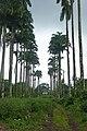 Vestiges de l'ancienne roça à Ribeira Peixe (São Tomé) (6).jpg