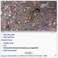 Video in Wikipedia - Vorhandene Browserunterstützung.png