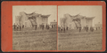 View of a damaged house with collapsed roof, by William Allderige & Son.png