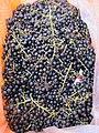 Vitis coignetiae (fruits).jpg