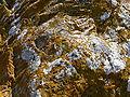 Volterraio - Steine und Flechten 4.jpg