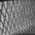WLANL - Harry -- The Travel -- Marmot - KunstHAL pattern.jpg