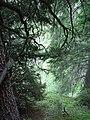 Wald Murgsee CH 3976.jpg