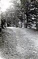Wald bei Gernrode 1940a.jpg