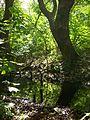Wald bei Karower Teiche.JPG