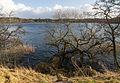 Walking along Hald Sø Viborg Commune Denmark.jpg