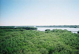 Weedon Island Preserve - View of the preserve from top of observation tower