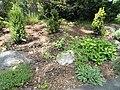 Wellesley College Botanic Gardens - DSC09706.JPG