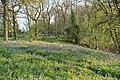 Whichford Wood - geograph.org.uk - 102490.jpg