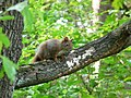 Wiewiórka, w okolicy źródełka - panoramio.jpg