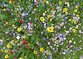 Wild flower meadow, Bradford University (28645179172).jpg