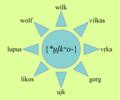 Wilk w językach IE.png