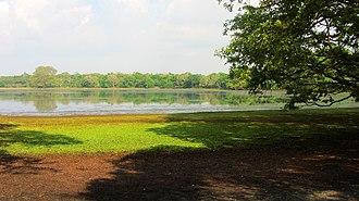 Wilpattu National Park - Marshy vegetation.