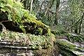 Winter in the yew-box grove - panoramio.jpg