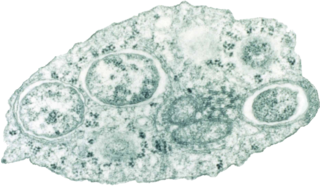 Alphaproteobacteria class of bacteria