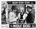 Wolf Dog lobby card.jpg