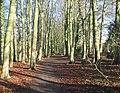 Woodland footpath - geograph.org.uk - 656578.jpg