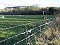 Wool on the wire near Wardour - geograph.org.uk - 1700479.jpg