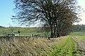 Woolley Down - geograph.org.uk - 1591879.jpg