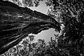 Wounded Tree (156484379).jpeg