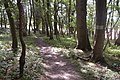 Wye Valley Walk through Paget's Wood nature reserve - geograph.org.uk - 1434419.jpg