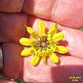 Zakynthos flora (35064206393).jpg