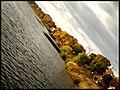 Zelta rudens - panoramio (1).jpg